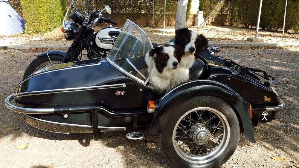 Photo chiens et moto Ralf